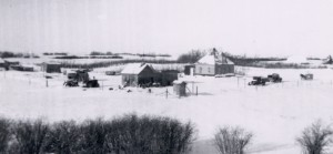 Irvine Family Farm Yard, 20 miles SW of Young Sask, 1950s